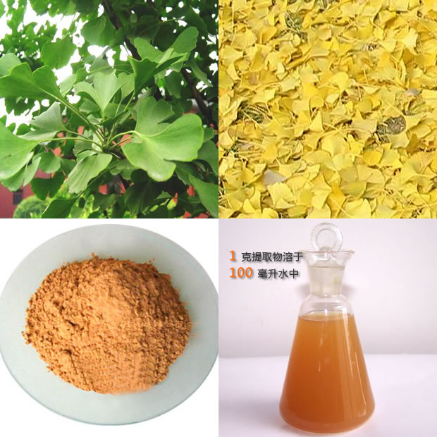 Ginkgo-Biloba-Leaf-Extract-CP2005-24-6-HPLC-