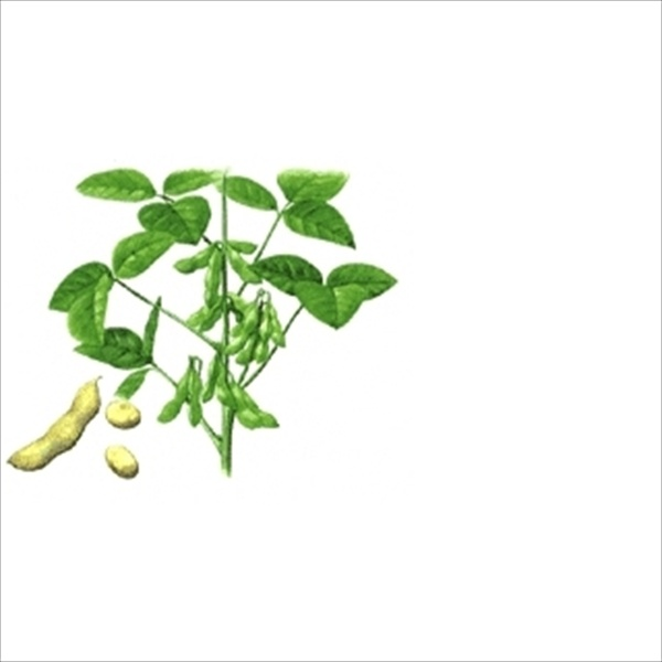 Soybean_Extract_Isoflavone_10-80